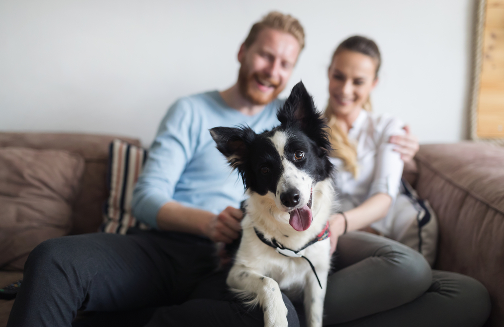 dog with man and woman in rental property